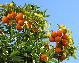 Сезонная работа за границей, сбор урожая в Европе – Финляндии, Испании и Польше